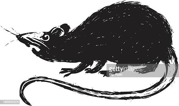 ilustrações de stock, clip art, desenhos animados e ícones de animados rato - ratazana