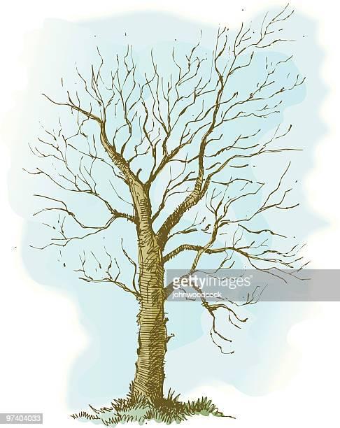 Croquis d'arbre d'hiver.