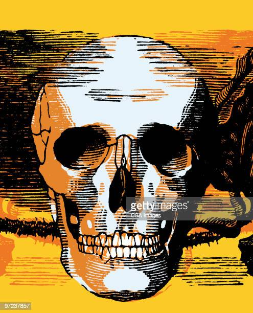 skull - death stock illustrations