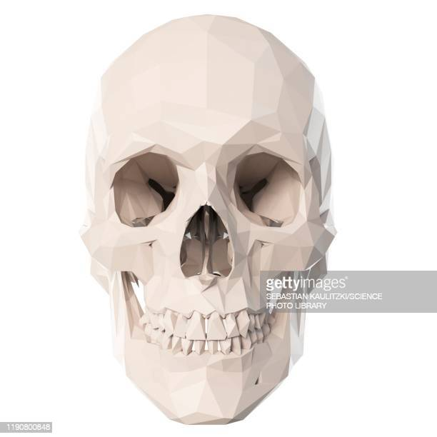 skull, illustration - transparent stock illustrations