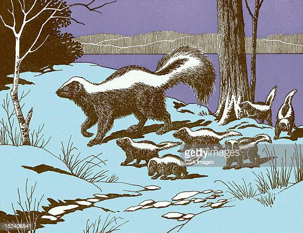 skunks - skunk stock illustrations