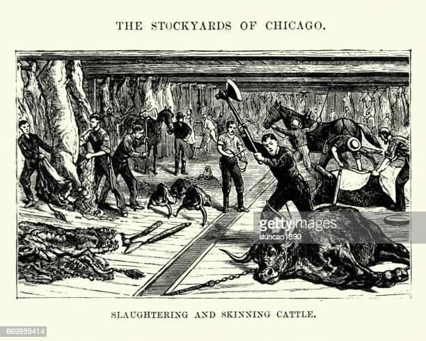 虐殺とスキニング牛、シカゴ、19 世紀 - 食肉処理場点のイラスト素材/クリップアート素材/マンガ素材/アイコン素材