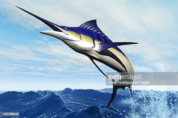 a sleek blue marlin bursts from the ocean surface in a grand leap. - marlin stock illustrations, clip art, cartoons, & icons