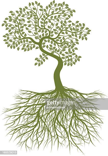 small bent tree and roots. - root stock illustrations, clip art, cartoons, & icons