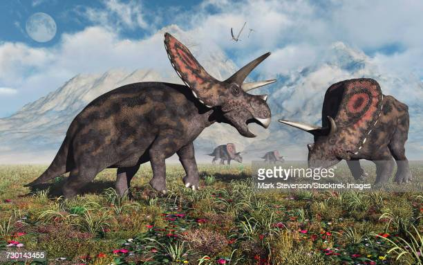 A small herd of Torosaurus dinosaurs during Earths Cretaceous period.