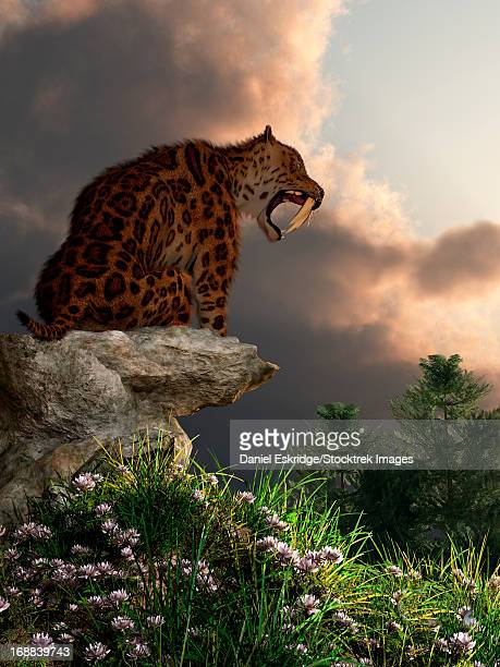 Smilodon Californicus sits atop a rock at the top of a hill bearing his fangs.