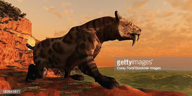 A Smilodon Cat from prehistoric times is on the prowl for his next prey.