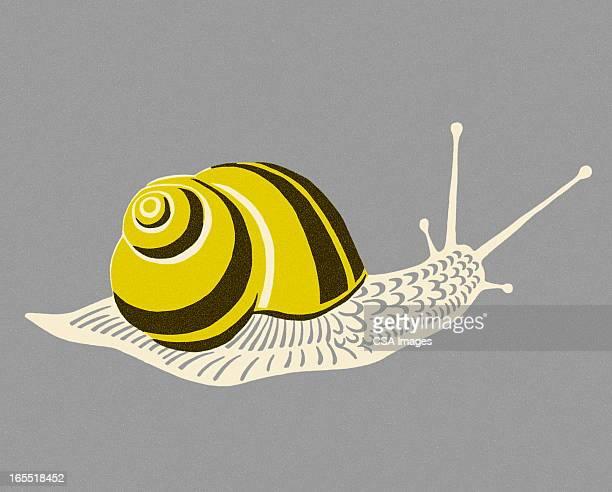 illustrations, cliparts, dessins animés et icônes de escargot - escargot