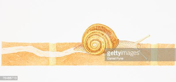 snail travelling on red brick wall leaving slimy mucus trail behind it, side view - mucus stock illustrations, clip art, cartoons, & icons