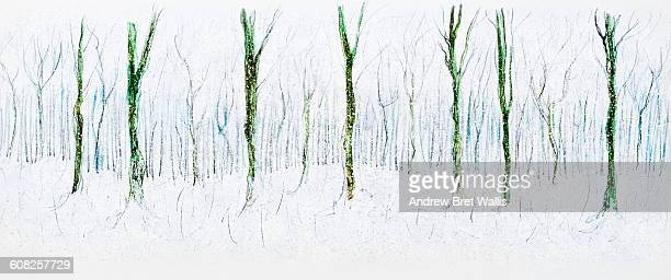 Snow covered frozen winter forest
