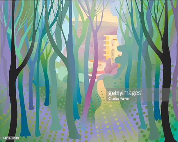 Soft undulating forest with path