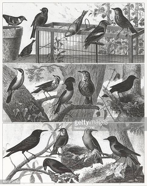 Songbird Engraving