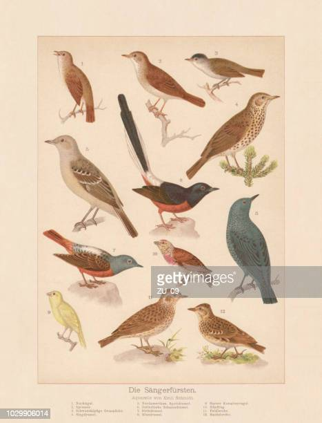 ilustrações de stock, clip art, desenhos animados e ícones de songbirds, chromolithograph, published in 1888 - litografia