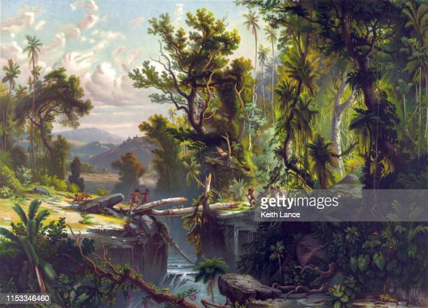 south american forest - tropical tree stock illustrations