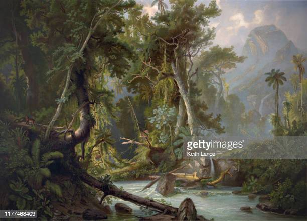 south american forest - woodland stock illustrations
