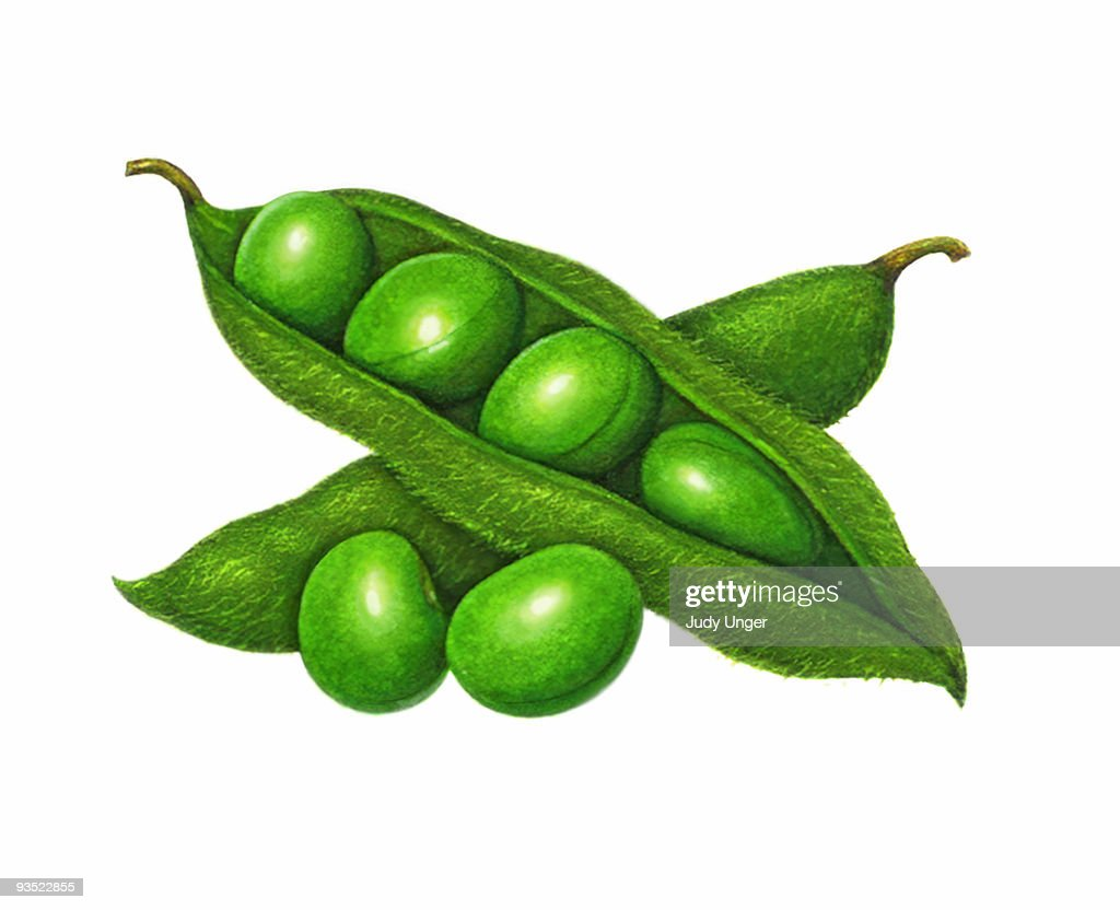 Soybean Pod High-Res Vector Graphic - Getty Images
