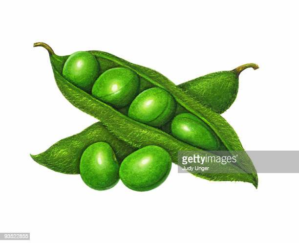 World's Best Soybean Stock Illustrations - Getty Images