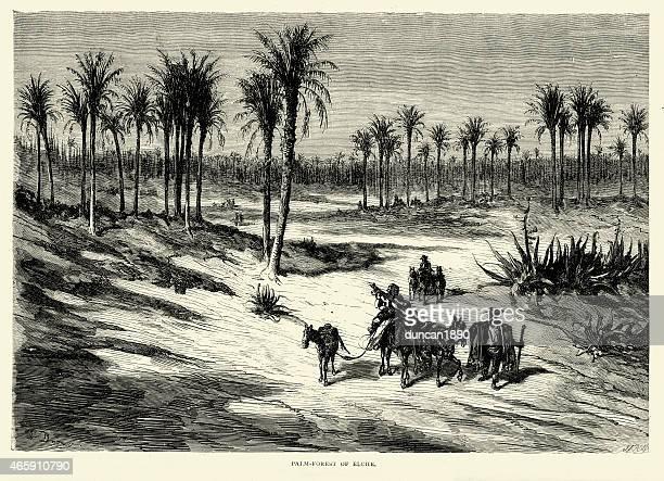 spanish pictures - palmeral or palm forest of elche - comunidad autonoma de valencia stock illustrations