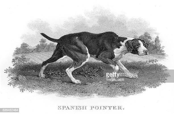 Spanish Pointer engraving 1812