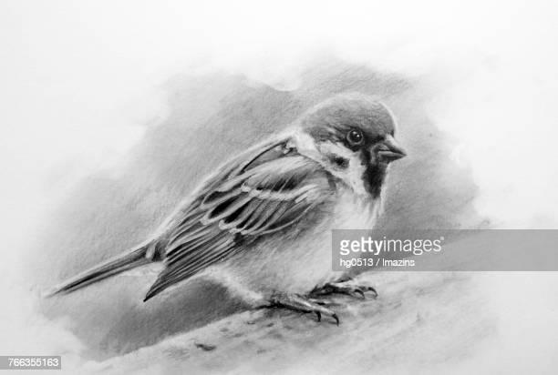 sparrow pencil drawing - animal limb stock illustrations, clip art, cartoons, & icons