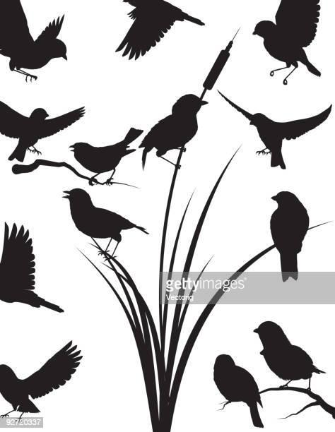 sperling silhouette - fliegen stock-grafiken, -clipart, -cartoons und -symbole