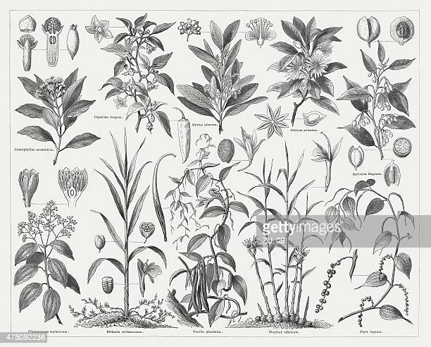 Spice plants, wood engravings, published in 1876