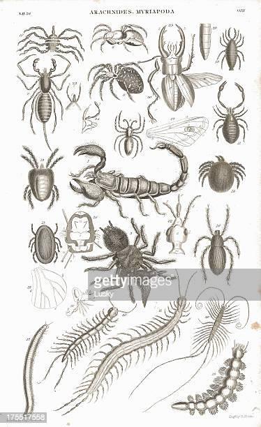 ilustrações de stock, clip art, desenhos animados e ícones de spiders litografia impressão - centopeia