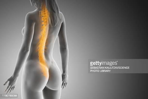 illustrations, cliparts, dessins animés et icônes de spine, illustration - partie du corps humain