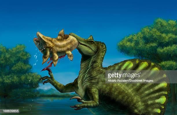 A Spinosaurus dinosaur fishing Mawsonias in a mangrove.