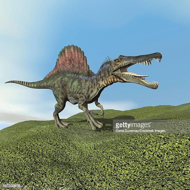 spinosaurus dinosaur walking on the grass. - animal spine stock illustrations, clip art, cartoons, & icons