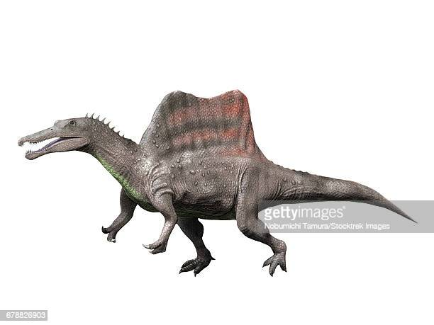 spinosaurus is a theropod from the late cretaceous period of egypt. - animal spine stock illustrations, clip art, cartoons, & icons