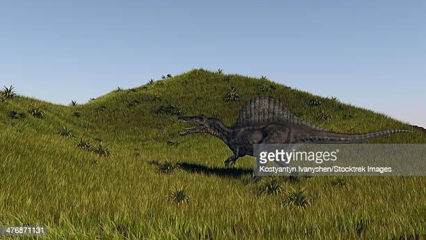 spinosaurus walking across a grassy field. - animal spine stock illustrations, clip art, cartoons, & icons