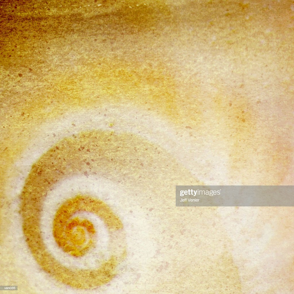 Spiral Moon Snail Background : Stock Illustration