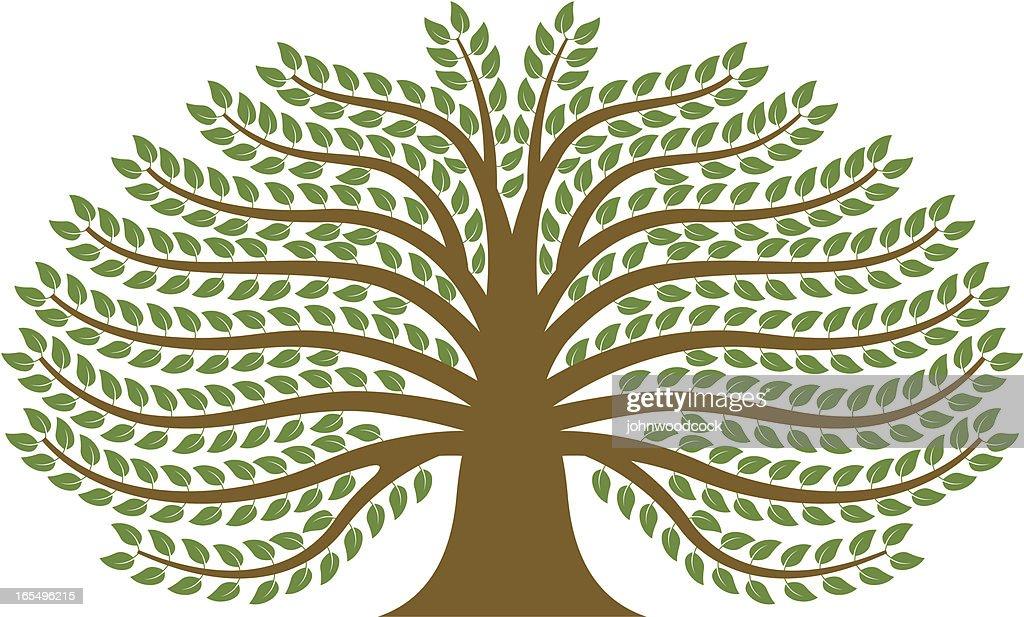 Spreading tree. : stock illustration