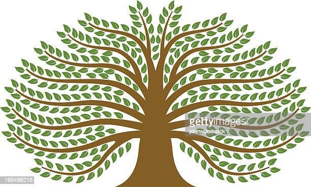 spreading tree. - family tree stock illustrations, clip art, cartoons, & icons
