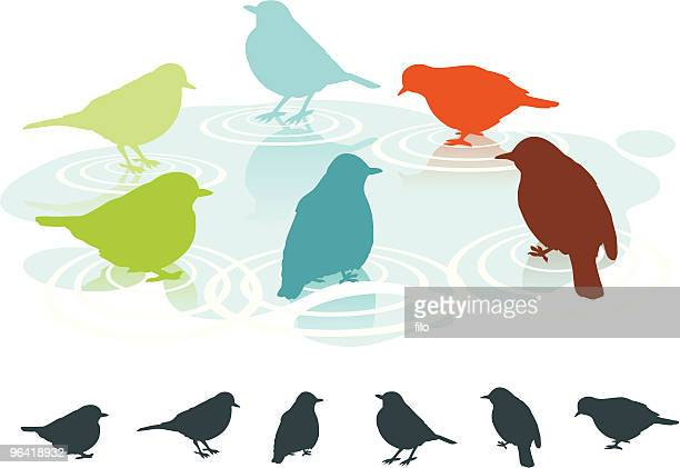 spring birds - puddle stock illustrations, clip art, cartoons, & icons