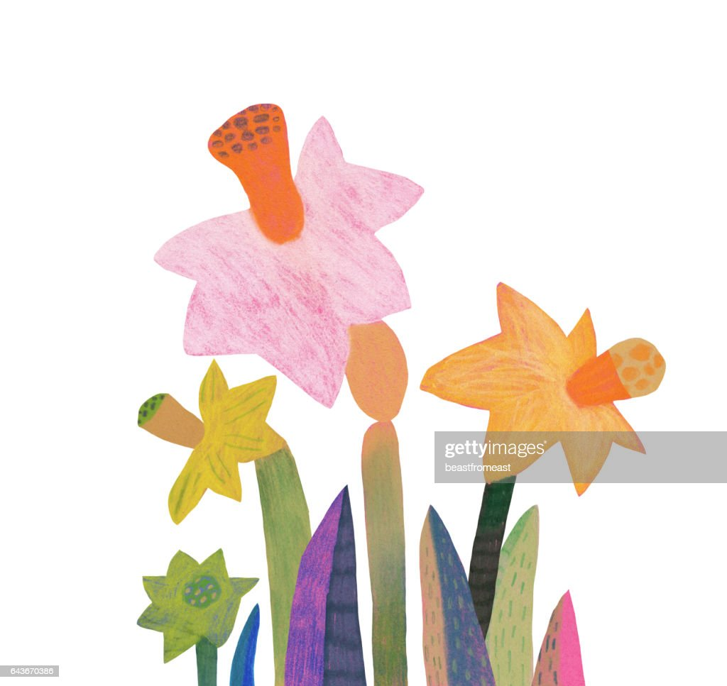 Spring Flowers Daffodils Stock Illustration Getty Images