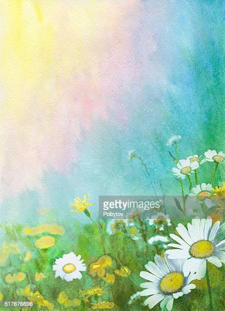 ilustraciones, imágenes clip art, dibujos animados e iconos de stock de fondo de acuarela de - planta de manzanilla