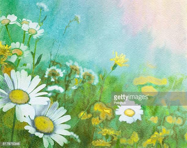ilustraciones, imágenes clip art, dibujos animados e iconos de stock de acuarela de fondo con margaritas - planta de manzanilla