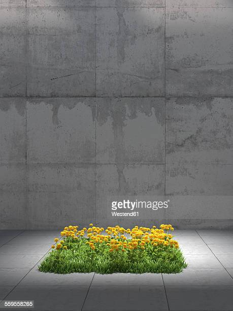 square of dandelion meadow in between concrete surrounding, 3d rendering - artificial stock illustrations
