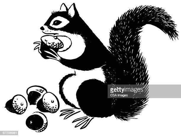 illustrations, cliparts, dessins animés et icônes de squirrel eating acorns - écureuil