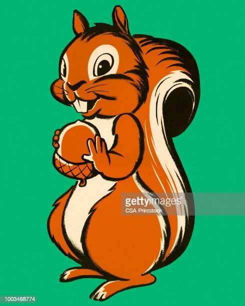 illustrations, cliparts, dessins animés et icônes de écureuil tenant un écrou - écureuil