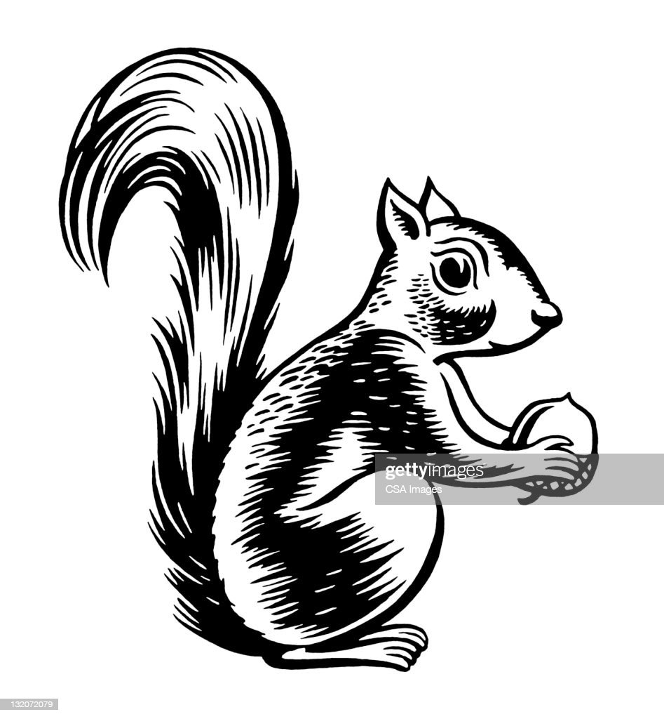 Squirrel Holding Nut : stock illustration