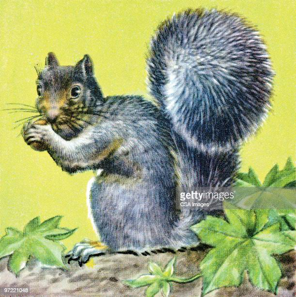 squirrel - 動物の毛点のイラスト素材/クリップアート素材/マンガ素材/アイコン素材