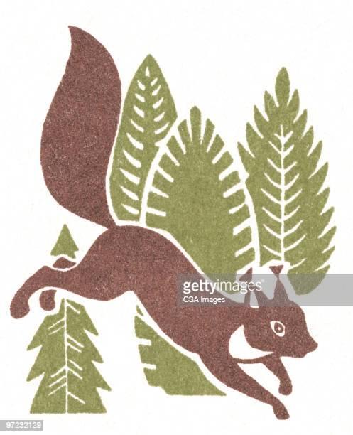 squirrel - pine wood material stock illustrations, clip art, cartoons, & icons