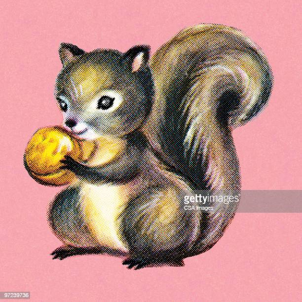 squirrel - squirrel stock illustrations