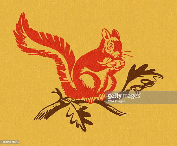 squirrel on a branch - squirrel stock illustrations
