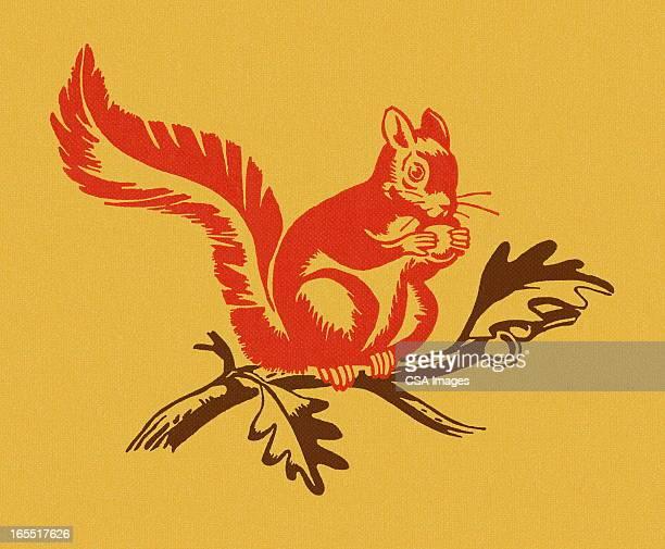 illustrations, cliparts, dessins animés et icônes de écureuil sur une succursale - écureuil