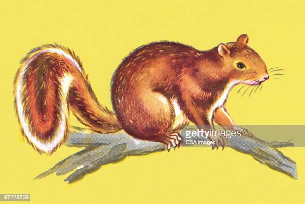 illustrations, cliparts, dessins animés et icônes de squirrel on a branch - écureuil
