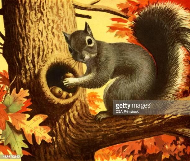 squirrel storing nuts - squirrel stock illustrations